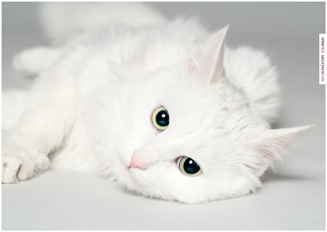 http://catsonlain.ucoz.ru/_fr/0/5172773.jpg